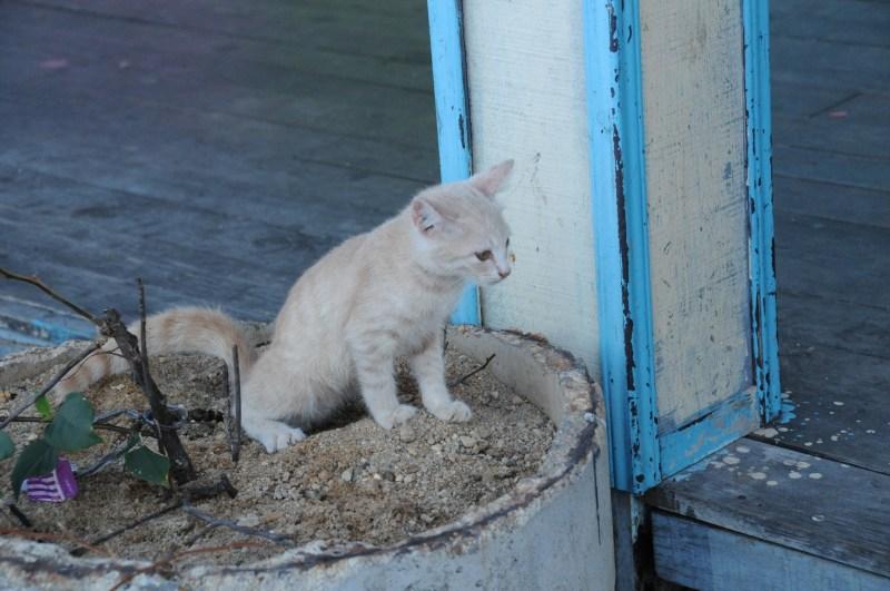 cat toilet outdoor